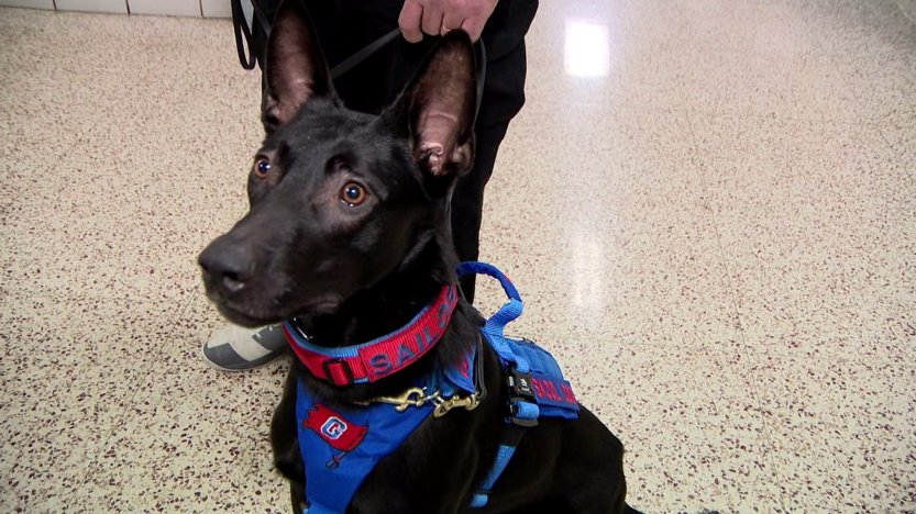 The World We Live In: Active shooter detection dogs