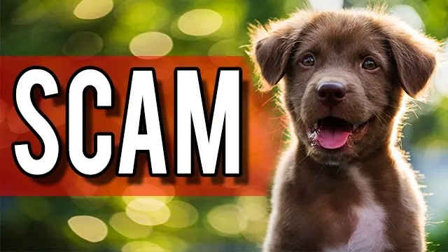 Woman asked for nude pics in craigslist puppy scam